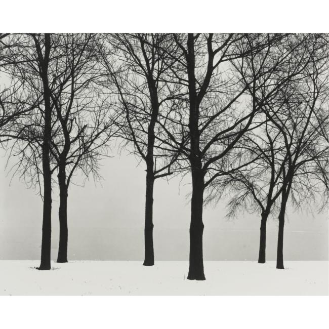HARRY CALLAHAN - 1912-1999 - CHICAGO (TREES IN SNOW) - 31,250 USD - © Sotheby's